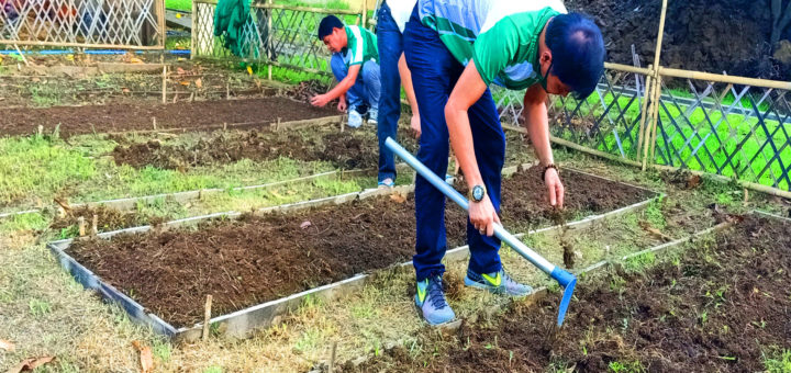 Greening Activity in our Mini Orgranic Farm